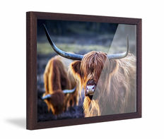 Framed Skew Brown