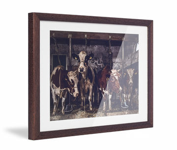 Framed Skew Brown Pp Cream