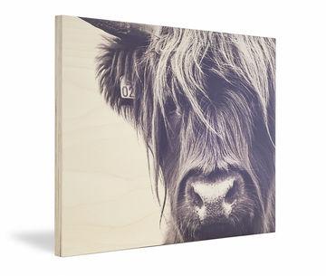 Schotse hooglander foto op hout multiplex