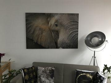 Foto olifant op aluminium dibond