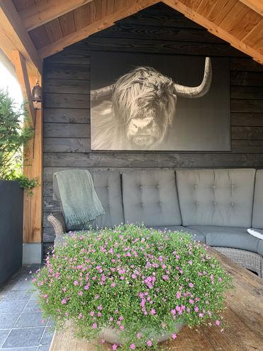 Schotse Hooglander buitencanvas Werk aan de Muur