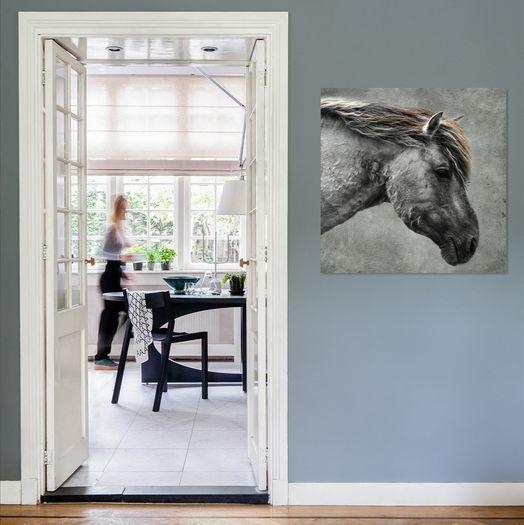 Paarden Sfeerfoto Collectie