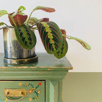 Vintage interieur planten Werk aan de Muur