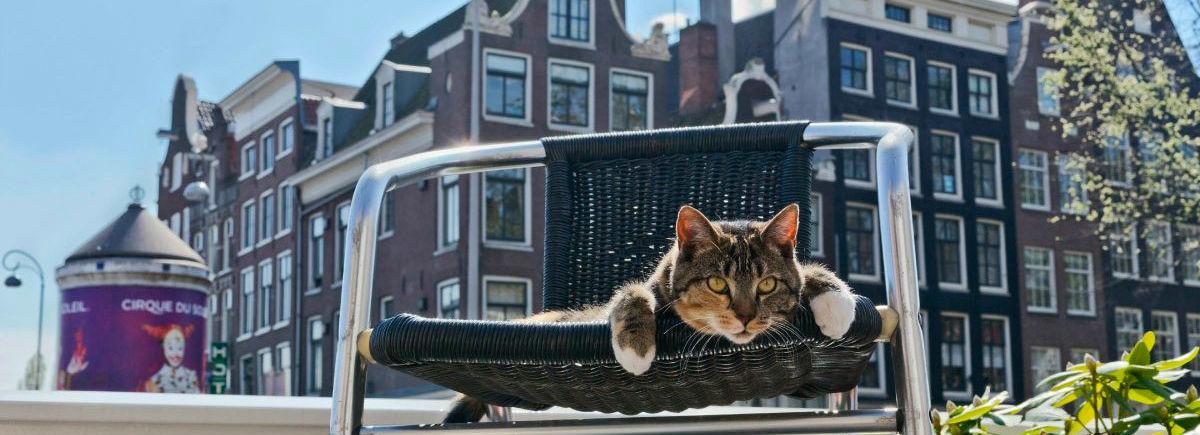 header-cat