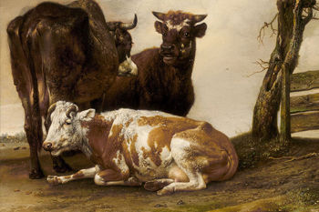 Oude Meesters Koeien
